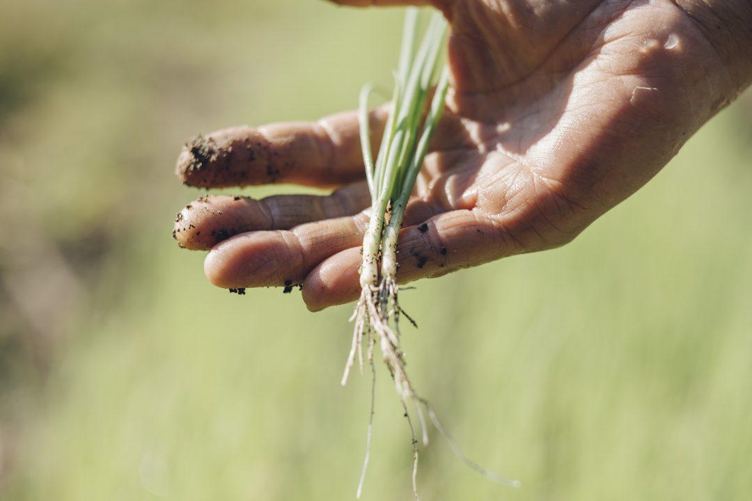 想いが織りなす四季の野菜の写真