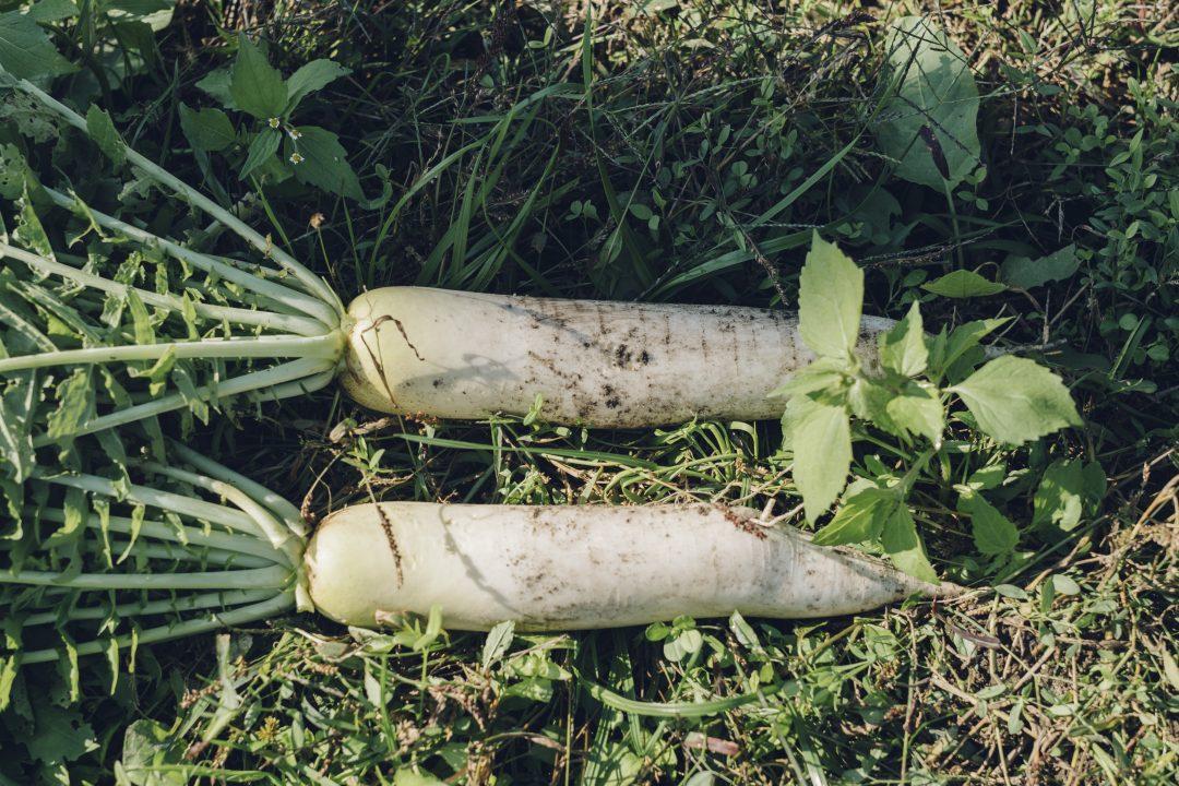 但馬の野菜の写真